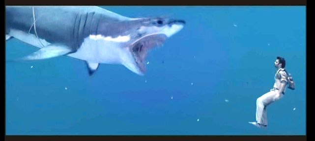 sharkChatrapathi10