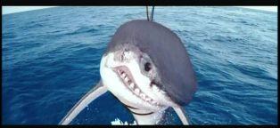 sharkChatrapathi11