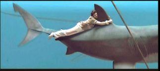 sharkChatrapathi6