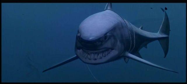 sharkChatrapathi7