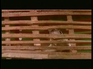 CinemaChaat_DoodhKaKarz_loyal snake