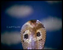 Toofan Rani-snake