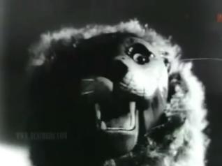 Yaadein-lion
