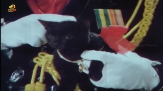 Lady-James-Bond-Supreme and cat